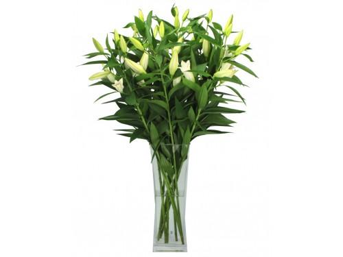 Лилии восточные белые