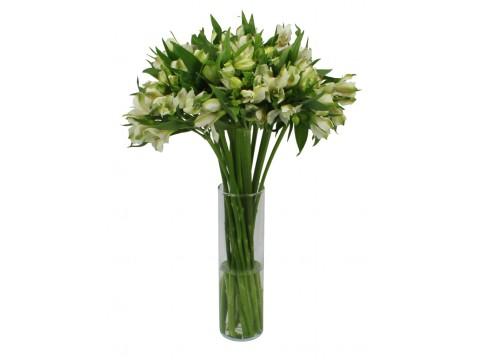 Белая альстромерия, , 300 р., Alstroemeria white, , Цветы