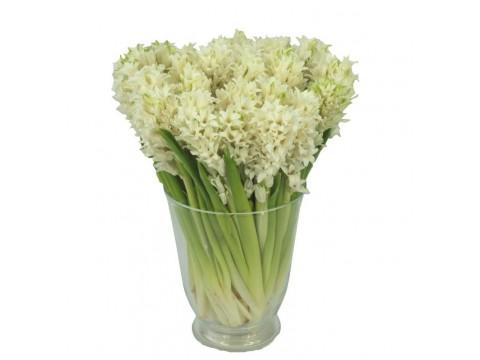 Белые гиацинты, , 350 р., white hyacinths, , Цветы