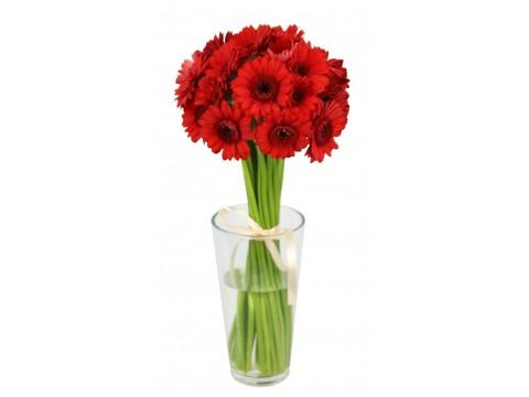 Герберы мини красные, , 180 р., ger-mini, , Срезанные цветы