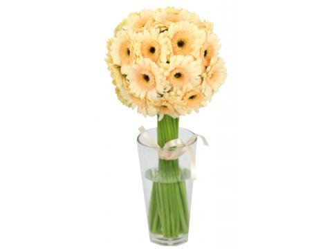 Герберы мини кремовые, , 180 р., ger-mini, , Срезанные цветы