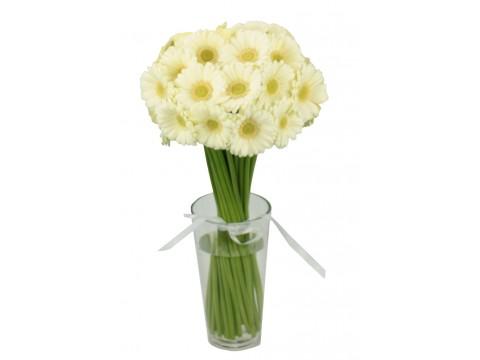 Герберы мини белые, , 180 р., ger-mini, , Срезанные цветы