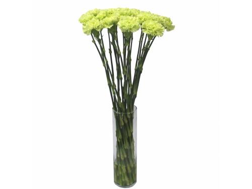 Гвоздики зеленые