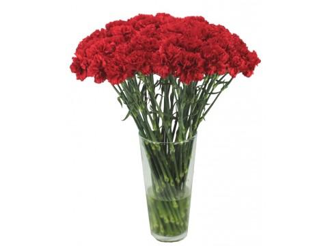 Гвоздики красные, , 80 р., red carnation, , Срезанные цветы