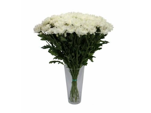 Кустовая белая хризантема