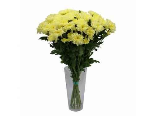 Кустовая желтая хризантема