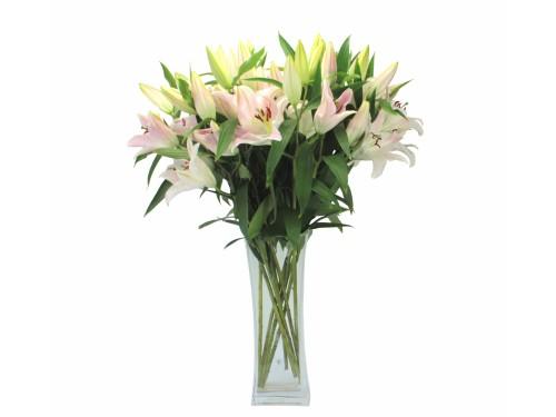 Лилии восточные розовые