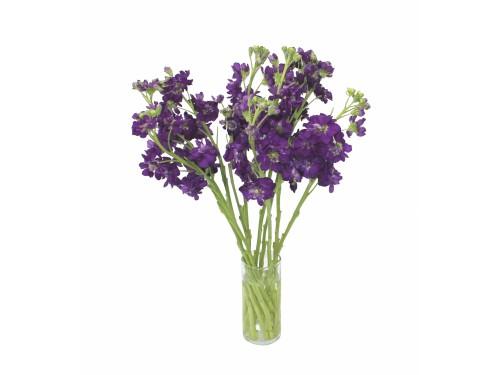 Маттиола фиолетовая