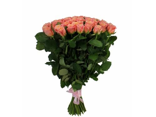 """Розы """"Мисс пигги"""""""