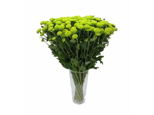 Сантини Зеленая