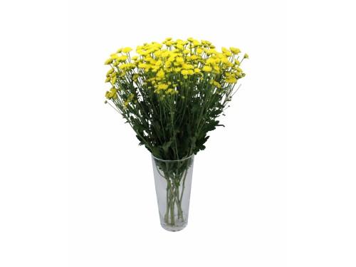 Сантини Желтая