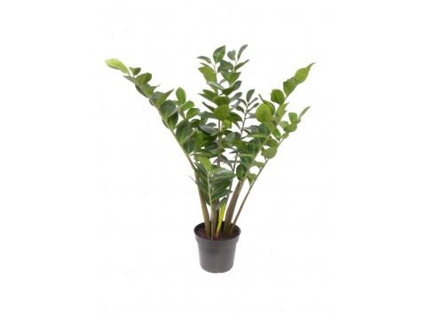 Замиокулкас, , 1300 р., zamiokulkas, , Горшечные растения