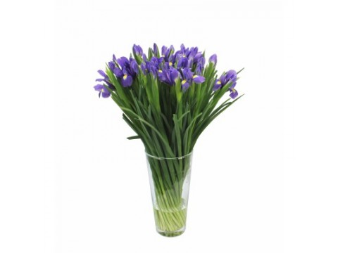 Ирисы синие, , 200 р., blue irises, , Срезанные цветы